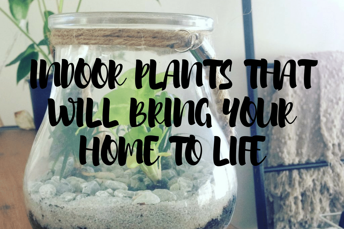 Indoor Plants That Will Bring Your Home To Life!