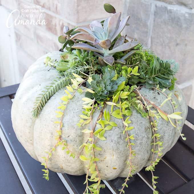 DIY Fall Decor Pumpkin Succulent Holder